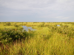landowner_landscape