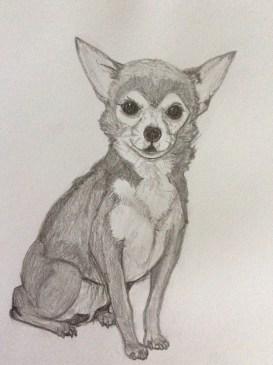Chihuahua Bleistift Grafit Zeichnung