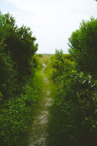 The path to the beach.