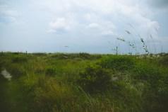 WHERE'S THE BEACH. WHAT THE GREEN.