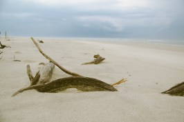 Lots of dead branches were scattered about the beach.