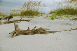 Tons of wood all around the beach.