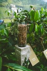 Botanical Garden   Spice World