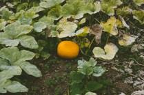 Issa Pumpkin!