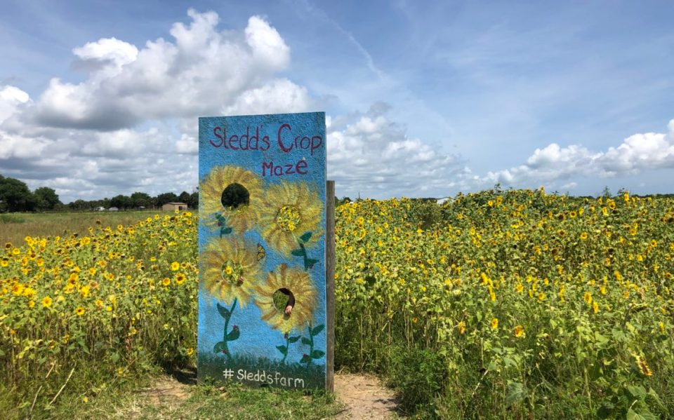 Florida Sunflower Farm You Need To Visit With Your Kids-Tiffany D. Brown