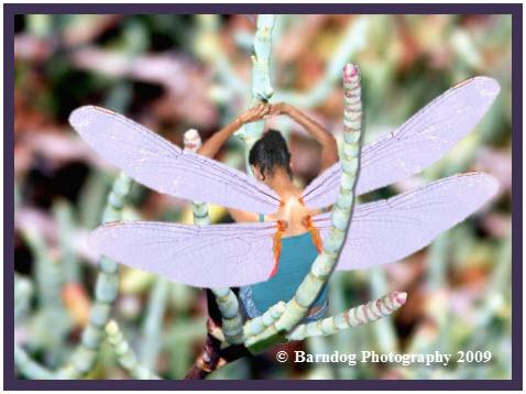 Dragonfly - I