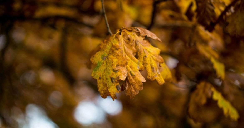 Autumnal leaf on tree