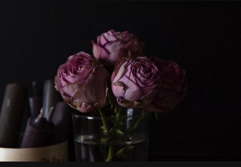 Pink roses in a jar
