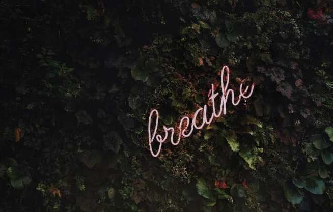 Neon lights saying 'Breathe' on a background of plants