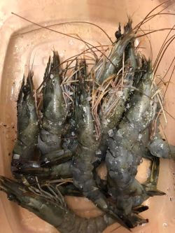 Cleaned Prawns in a dish with salt on top