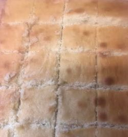Cake cut into squares