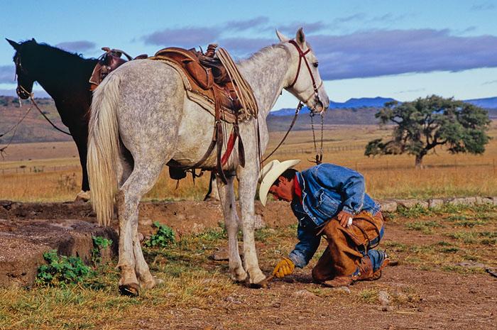 Cowboy |  Jerod Foster
