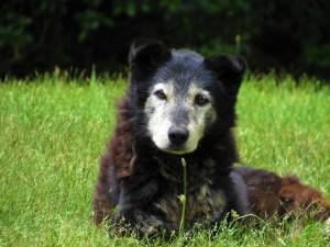 Metacam Hund kaufen ohne rezept