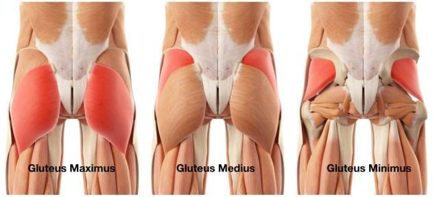 glutealanatomy
