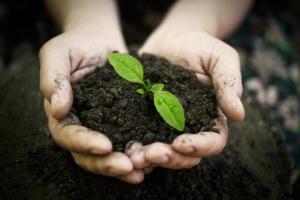 hands-in-soil