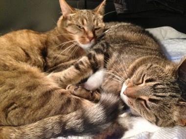 Milou och Tiger tillsammans