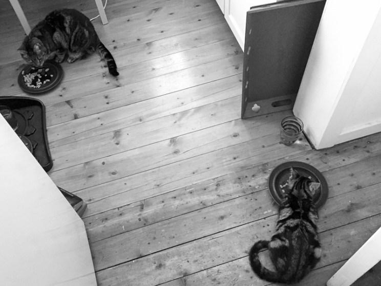 Middag på behörigt avstånd, Tiger till vänster håller koll på utomjordingen.