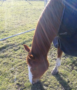 J Lo grazing happily as we played