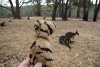 SA Cleland Wildlife-8493