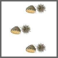 フリー素材:壁紙・背景;ガーリーな栗のイラストwebデザイン素材
