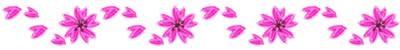 春らしい桜のイラストの飾り罫。ネットショップ、webデザインのフリー素材。アルバムの飾り罫にも。