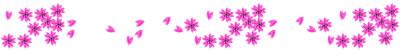 大人可愛いピンクの桜いっぱいのイラストの飾り罫のwebデザイン素材