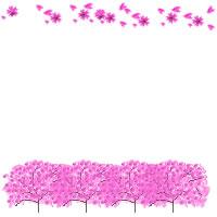 ネットショップのバナー広告のwebデザイン素材:ピンクの桜の木と花びらの飾り枠のフリー素材