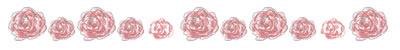 ネットショップ、webデザインの飾り罫のフリー素材:大人可愛いピンクの花(薔薇)のイラストの飾り罫