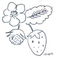 アイコン(twitter)のフリー素材:北欧風の鉛筆画のイチゴと花のイラスト;200×200pix