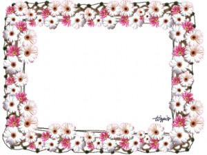 フェアリー系大人可愛いマーガレットの写真いっぱいのフレームのフリー素材