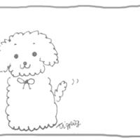 モノトーンのトイプードルの落書き風イラスト(300×250pix)