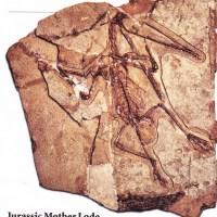 Curiosidades arqueológicas 11 (Pterosaurs, Microraptor, Duckbill, Pre-humano y Bosque fósil)