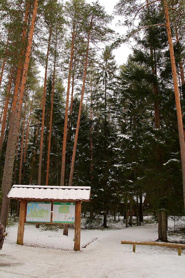 Lahemaa national park in winter
