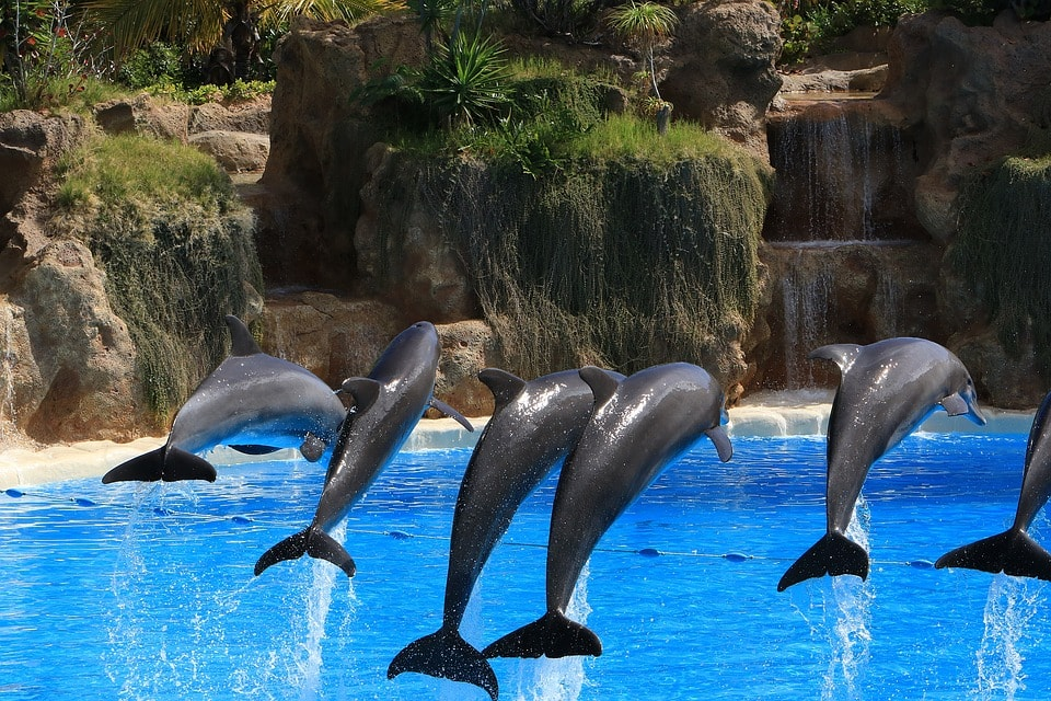 things to do in tenerife - Loro Parque