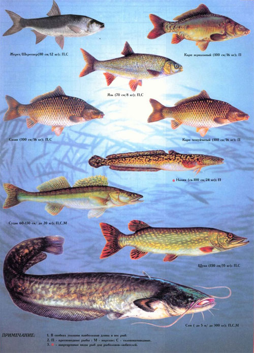 Виды Рыб В Беларуси Фото Название Рыб