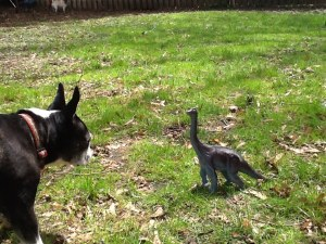 """""""Predator Challenge! This diplodocus is about to be eaten by a giant Boston terrier. In 200 words, explain why this situation is implausible."""""""