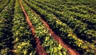 تعرف ترتيب الدول العربية من حيث الإنتاج الزراعي