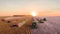 ما هي زراعة مربحة في الإمارات
