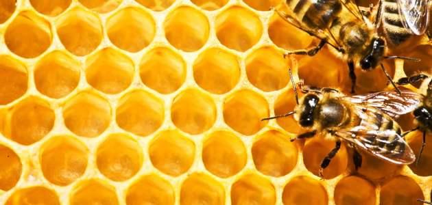 مشروع تربية النحل في الكويت