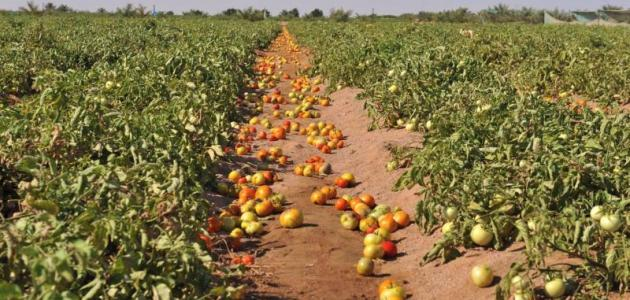 كيف يمكن اخصاب الاراضي الزراعية