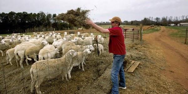 تأسيس مزرعة تربية المواشي في المغرب