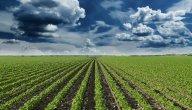 أهم المشاريع الزراعية في سوريا مربحة 2021