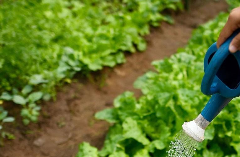 La biodiversidad de los suelos es ignorada, pero es fundamental para alimentar al planeta