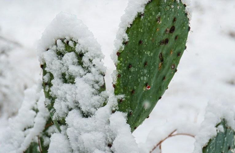 El fuerte contraste del frío y el calor registrado en febrero, la nueva normalidad del cambio climático