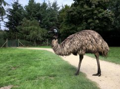 Zooparc Overloon (8)