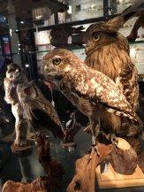 Natuurmuseum Brabant (17)