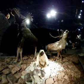 Natuurmuseum Brabant (24)