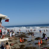 Then I got to Main Beach! It was way cooler in Laguna! But geez! Soooo many people! Sooo much kelp! The surf was up! The red flag was out! The tide was high! What a day!