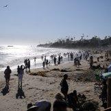 Busy, busy beach!