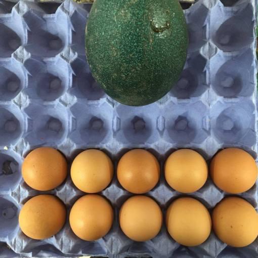 One emu egg vs 10 chicken eggs